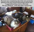 cat boxes