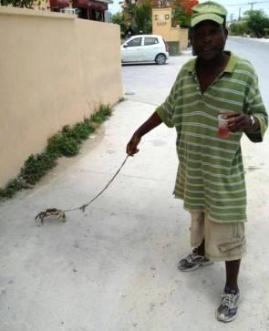crab walker