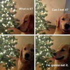 can I eat it