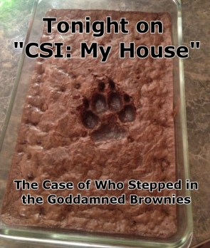 csi – my house – who stepped in the goddamned brownies