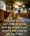 if you think dogs can't count