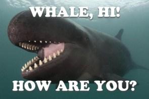 whale, hi