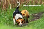 worlds worst hunting dog