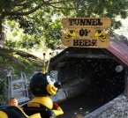 Tunnel of Bees