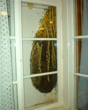 Honey Window