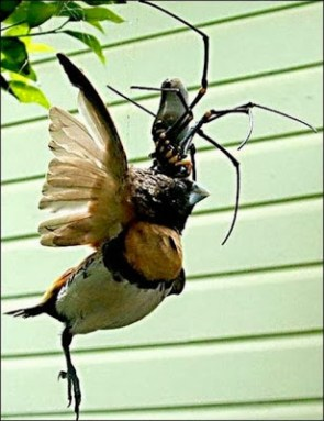 bird vs. spider