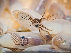 Cute Octopus Eggs