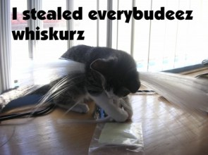 I stealed everybudeez whiskurz