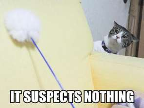 It suspects Nothing