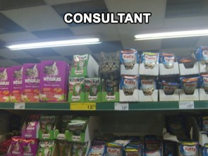 Kit Kat Consultant