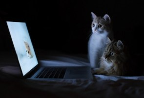 Kittens watching Laptop