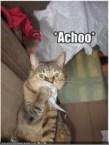 Kitty Sneeze