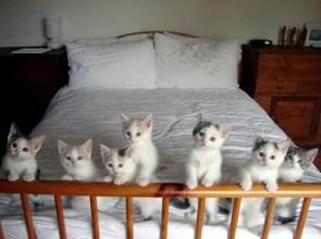 bed kittens