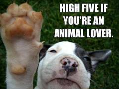 high five if you're an animal lover