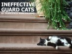 ineffective guard cats