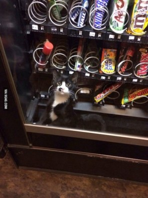 kitten snack machine