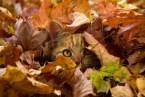 leaf Cat