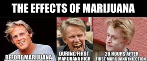 marijuana affects