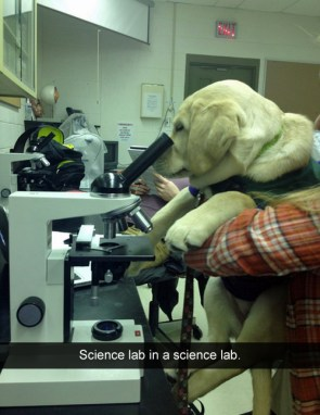 science lab in a science lab