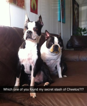 which one of you found my cheetos