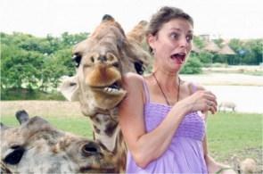 Friendly Giraffe