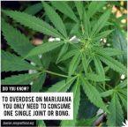 Overdose on Marijuana