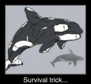 Survival Tricks