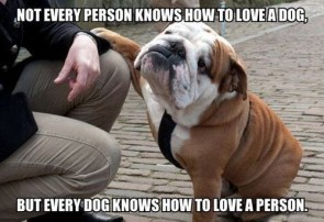 not every person knows how to love a dog