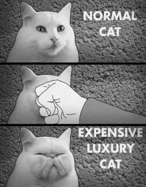 normal cat vs luxury cat