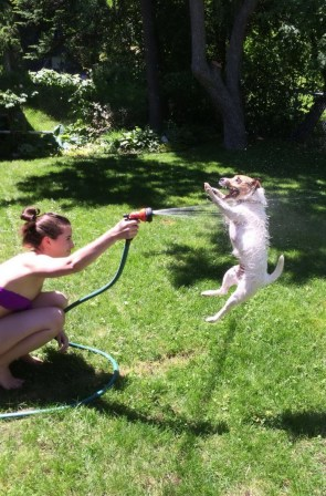 spray dog