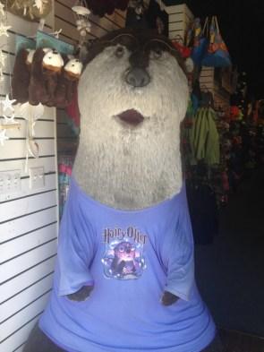 Hairy otter