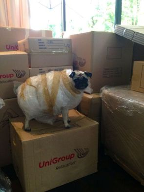 Pack your pug