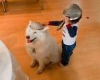 collindar dog