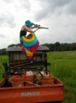 rainbow shooter