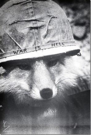 war fox