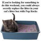 Kitty Pop Rocks
