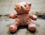 Meat Bear
