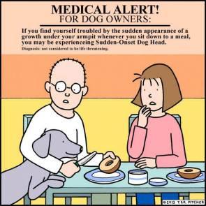 Medical alert for dog owners