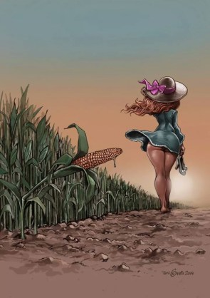 used corn