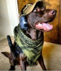 tactical dog