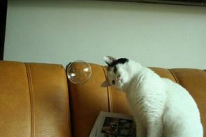 Mysterious Bubble