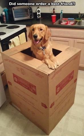 did someone order a best friend