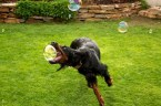 dogs love bubbles