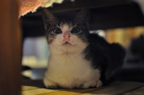under bed kitty