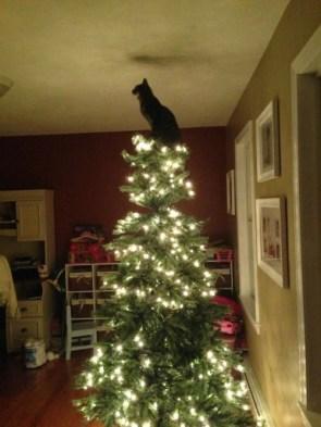 Cat Topper