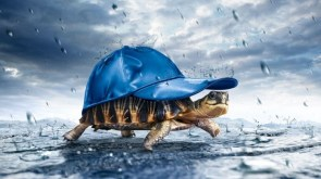 Happiness is a turtle with a hat