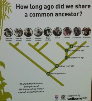 Common Ancestors