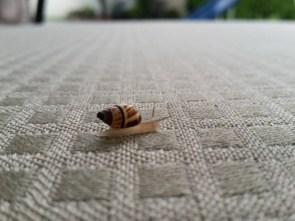Snail Racer