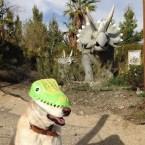 DinoDog