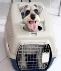 Dog carrier with doggy door